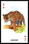Animals of the World Playing Cards publ. by U.S. Games Systems Inc. - Cat Ref 11886