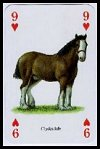 Horses and Ponies of the World Playing Cards publ. by Heritage Toy & Game Co. Ltd.,  1997. - Cat Ref 13067