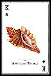 Seashells of the World Playing Cards publ. by U.S. Games Systems Inc. - Cat Ref 13186