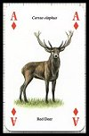 Wild Animals Playing Cards publ. by Heritage Toy & Game Co. Ltd., 1998 - Cat Ref 13199