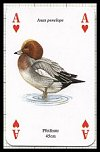 Wasserv�gel publ. by Heritage Playing Card Company - Cat Ref 13582