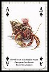 Seashore Life Playing Cards publ. by Heritage Playing Card Company, 2001 - Cat Ref 13608
