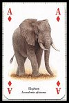 African Animals Playing Cards publ. by Heritage Playing Card Company, 2001 - Cat Ref 13609