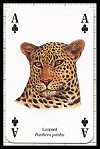 Wild Cats Playing Cards publ. by Heritage Playing Card Company, 2001 - Cat Ref 13611