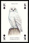 Birds of Prey Playing Cards by Heritage - Cat Ref 13755
